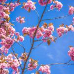 Bachblüten - Das Multi-Talent