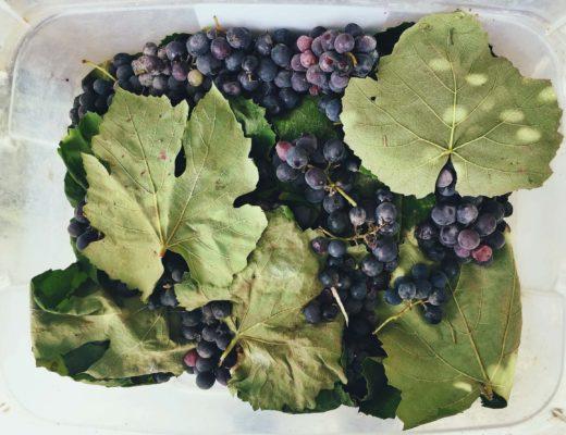 Weintrauben für Traubenkosmetik gegen freie Radikale