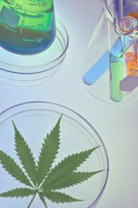 Cannabis im Labor, CBD ÖL